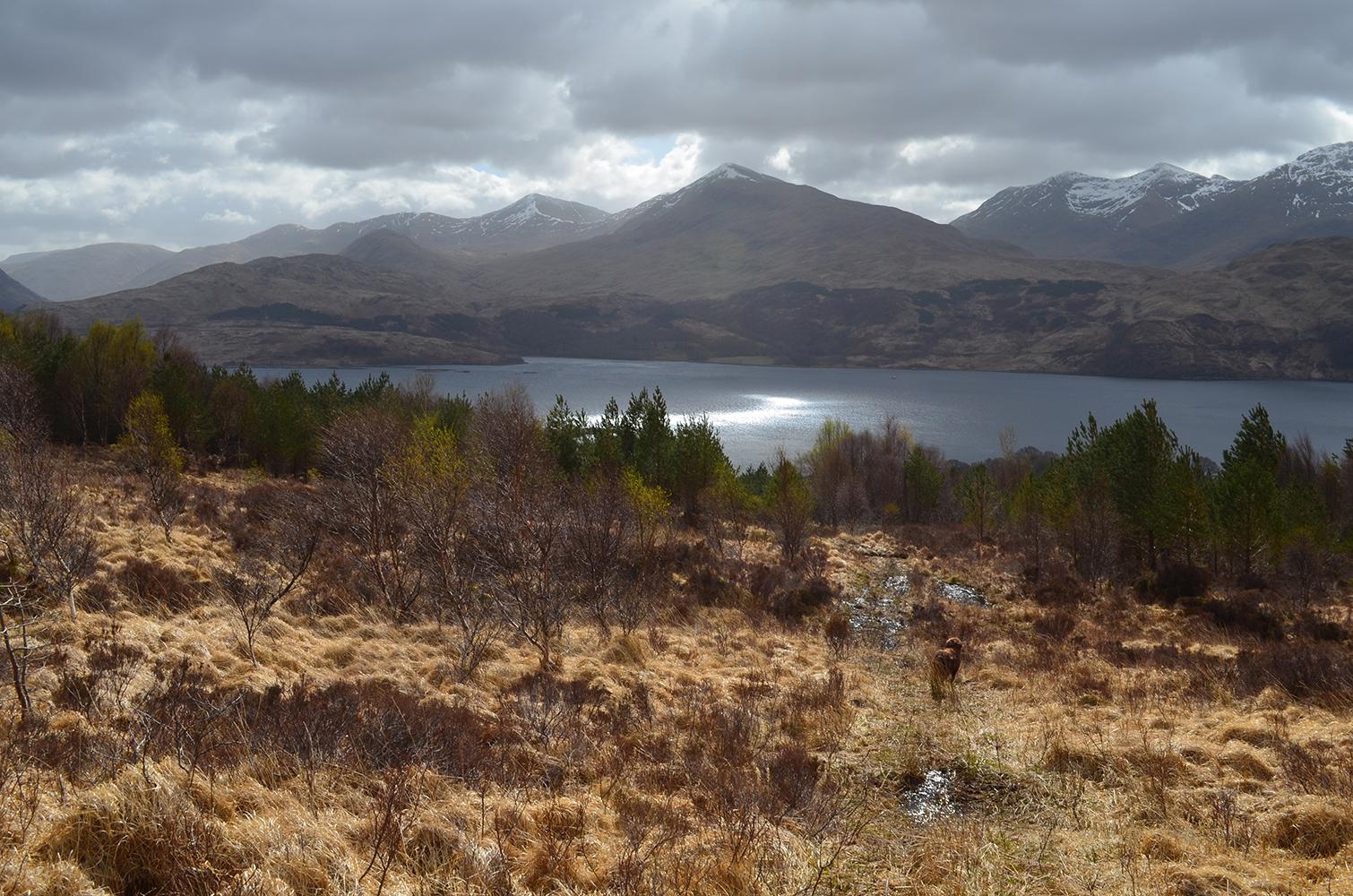 view above Cadderlie